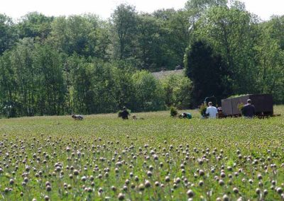 Verschoor Horticulture (1)