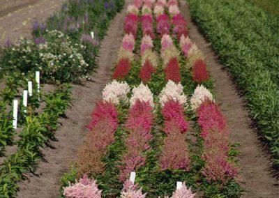 Verschoor Horticulture (10)