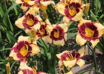 Verschoor Horticulture (14)