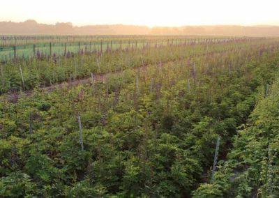 Verschoor Horticulture (17)
