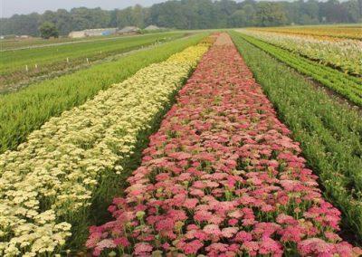 Verschoor Horticulture (19)