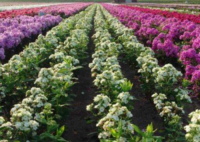 Verschoor Horticulture (20)