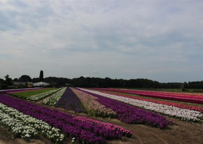 Verschoor Horticulture (21)