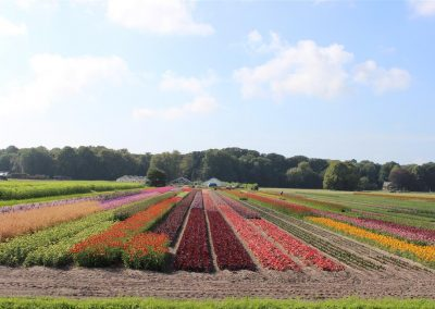 Verschoor Horticulture (22)
