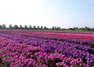Verschoor Horticulture (23)
