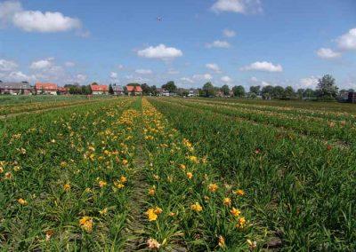 Verschoor Horticulture (24)