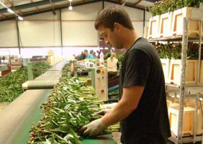 Verschoor Horticulture (29)