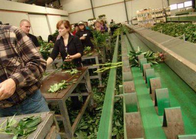 Verschoor Horticulture (30)