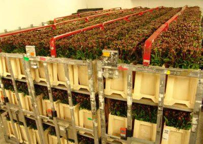 Verschoor Horticulture (31)