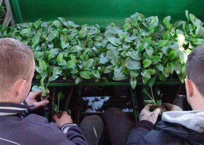 Verschoor Horticulture (4)