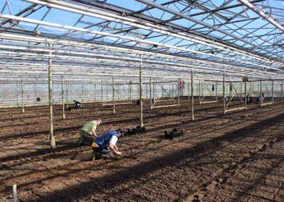 Verschoor Horticulture (5)
