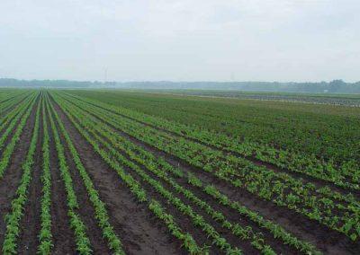 Verschoor Horticulture (8)