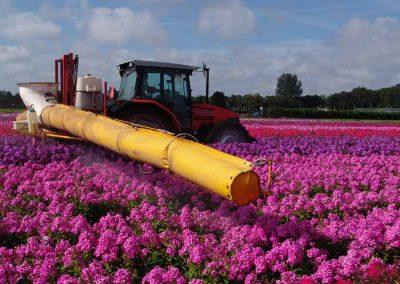 Verschoor Horticulture (9)